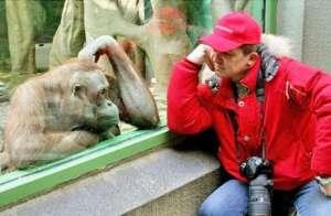 monkey_see_monkey_do